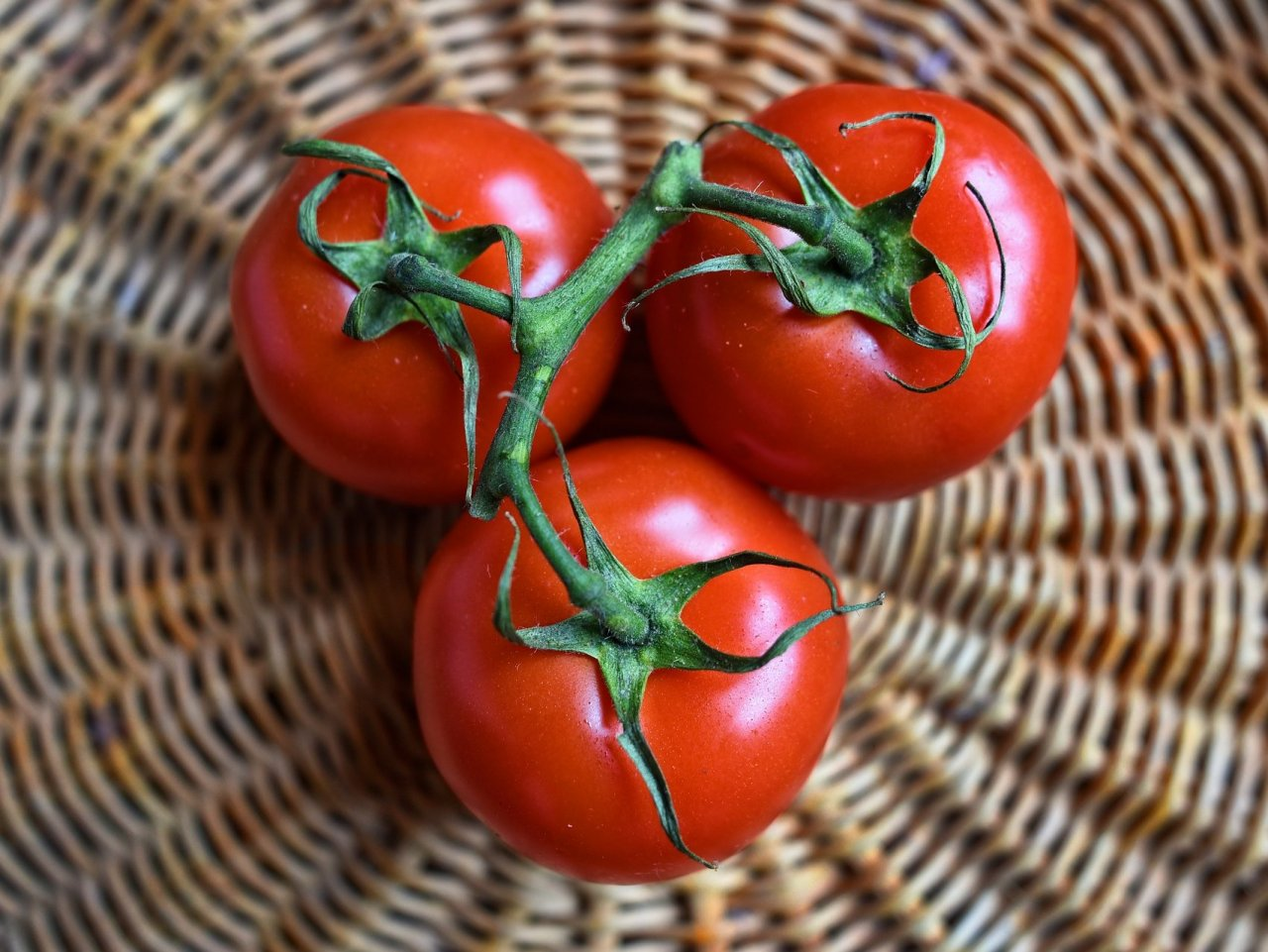 Three Tomatoes jigsaw puzzle