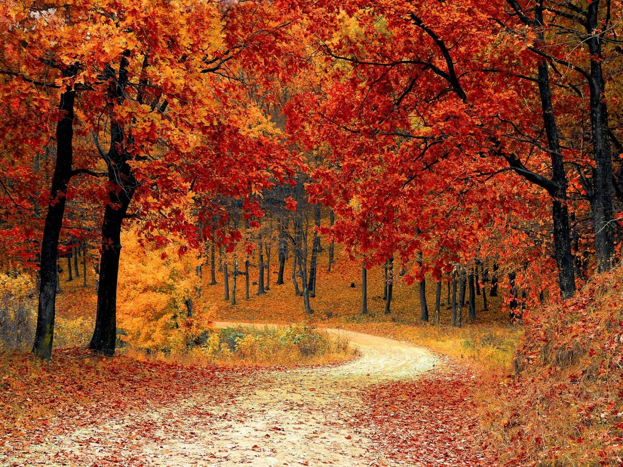 Autumn Forest Road jigsaw puzzle