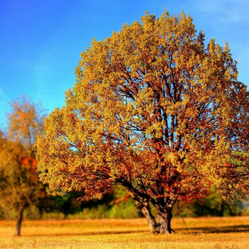 Autumn Tree jigsaw puzzle