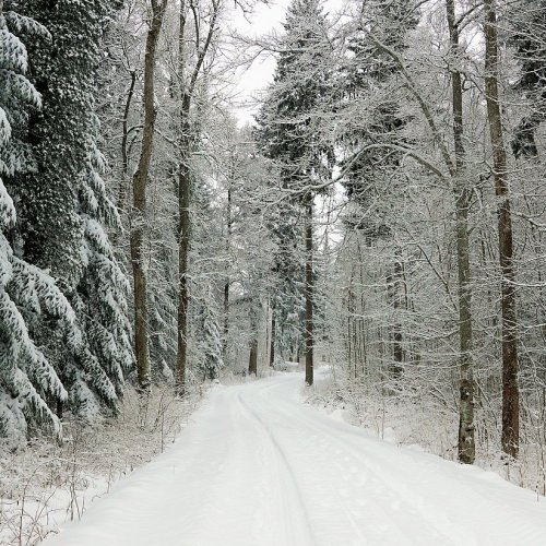 Winter Road Online Jigsaw Puzzle