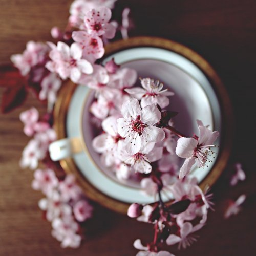 Cherry Blossoms in the Cup Online Jigsaw Puzzle