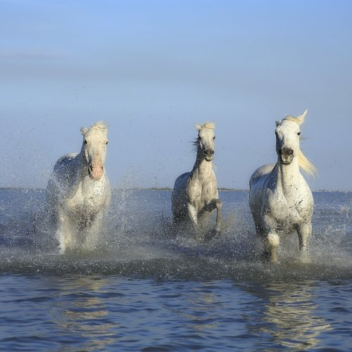 Three Horses in the Sea puzzle game