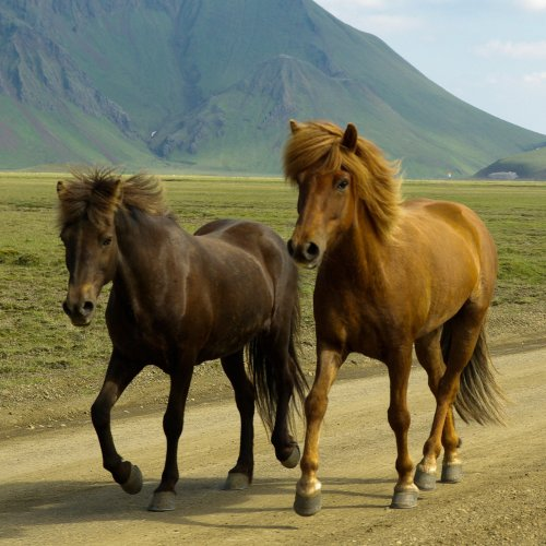 Two Horses on a Mountain Road puzzle game