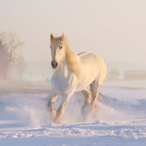 White Horse in the Snow puzzle game