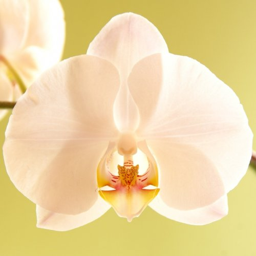 Tender orchid jigsaw puzzle
