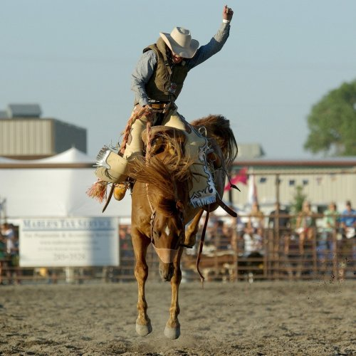 Rodeo Quiz: questions and answers